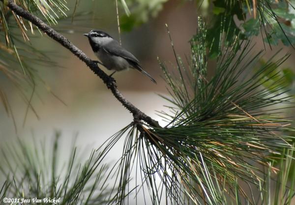 photos of bird