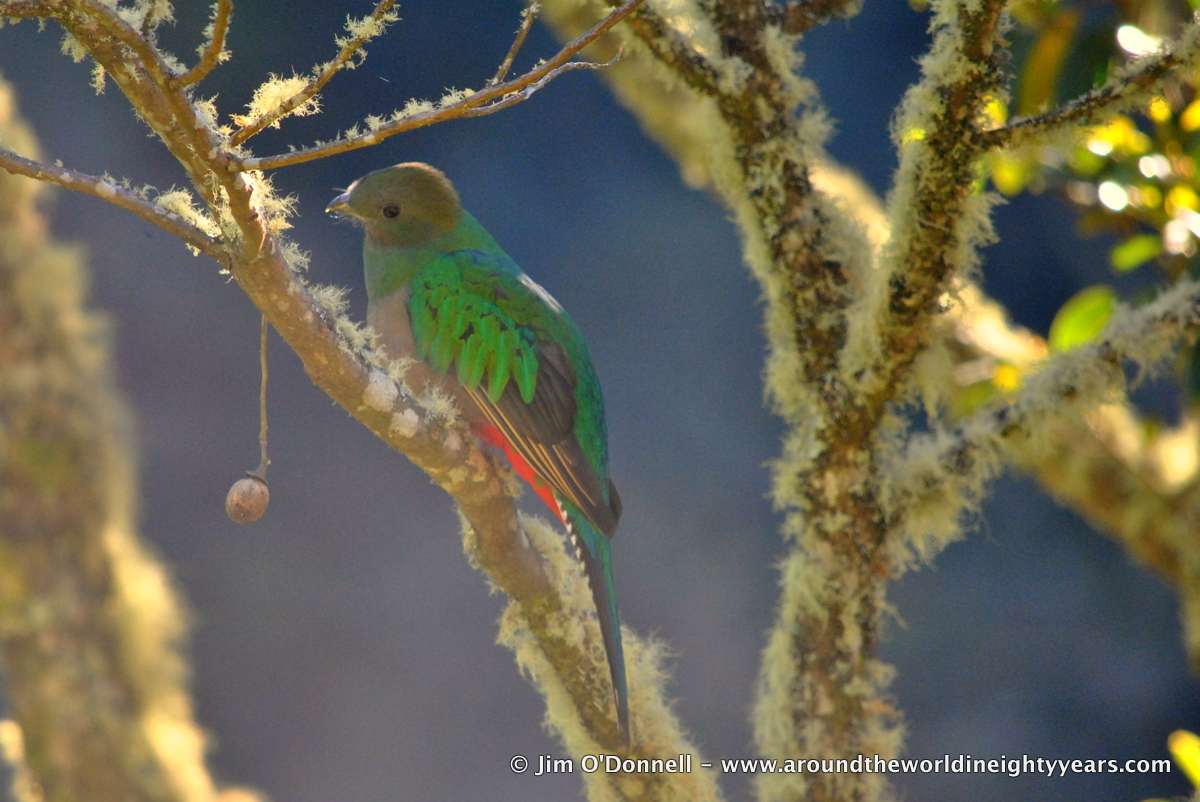 DSC 0345 El Quetzal   My Shot of the Day   December 3, 2013