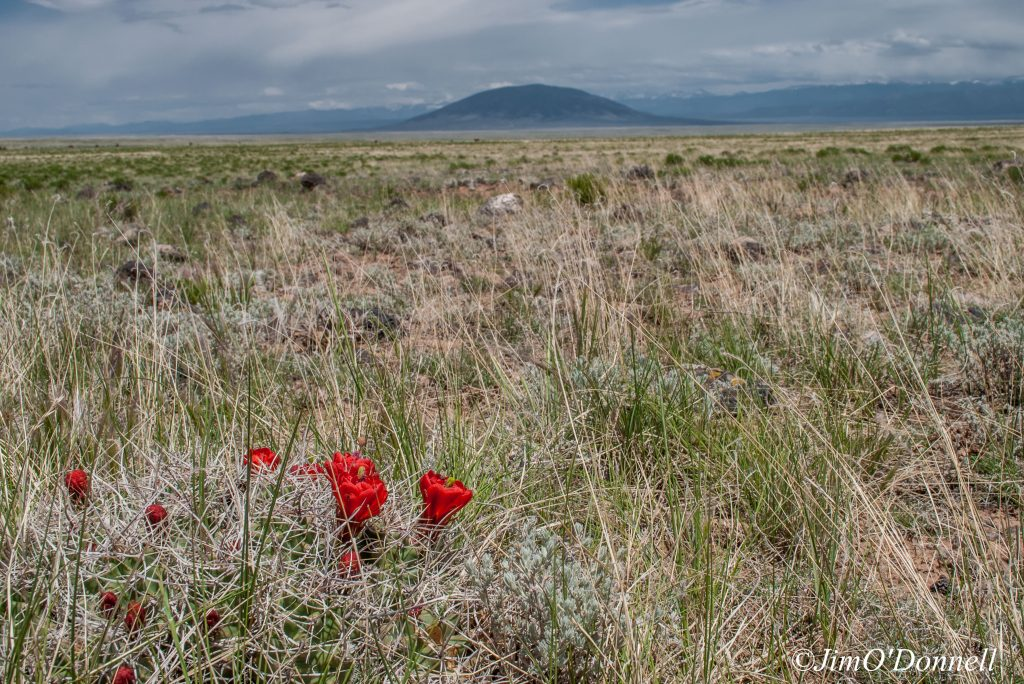 ODonnell_New_Mexico_RGDN_West_Side_Wilderness-116