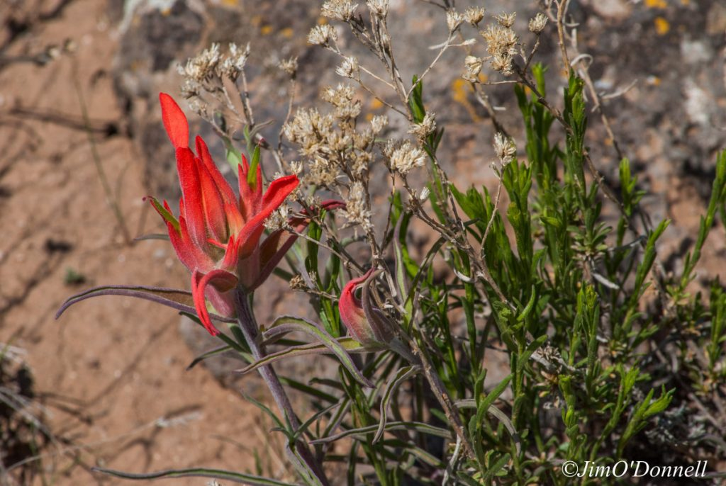 ODonnell_New_Mexico_RGDN_West_Side_Wilderness-152