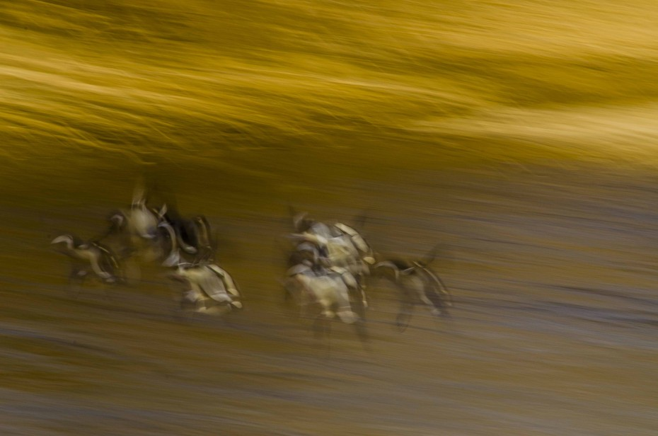 impressionism_photography_birds_flight_river (2)