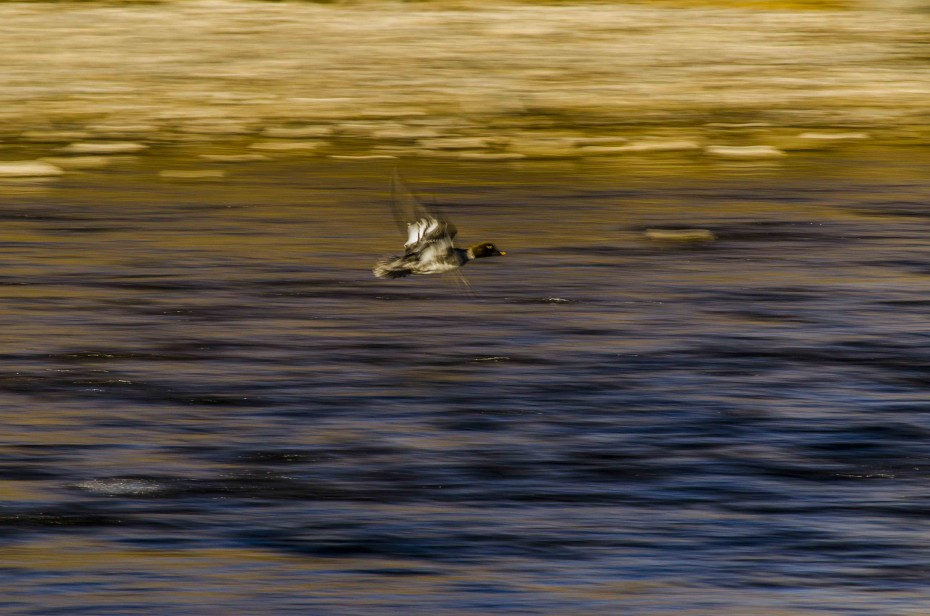 impressionism in photography birds in flight