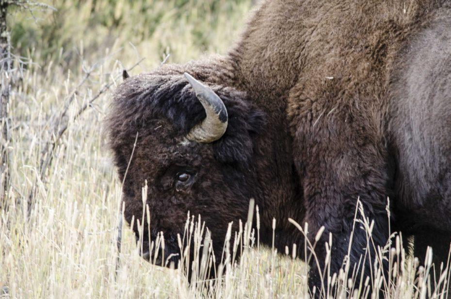 odonnell_wild_road_tour_wildlife-522