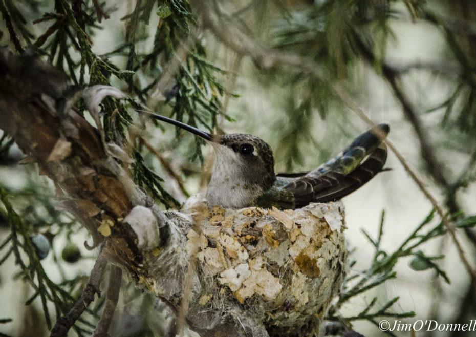 Bird Watching Rio Fernando Wetlands in Taos New Mexico